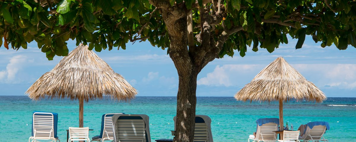 large tree and beach chairs on a beautiful montego bay beach