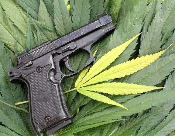 gun on top of marijuana